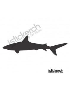 Haifisch 13