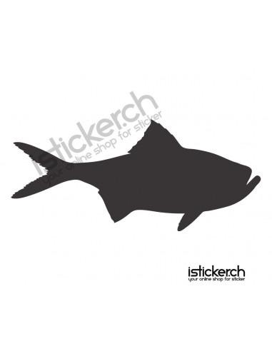 Fische & Haie Fisch 16