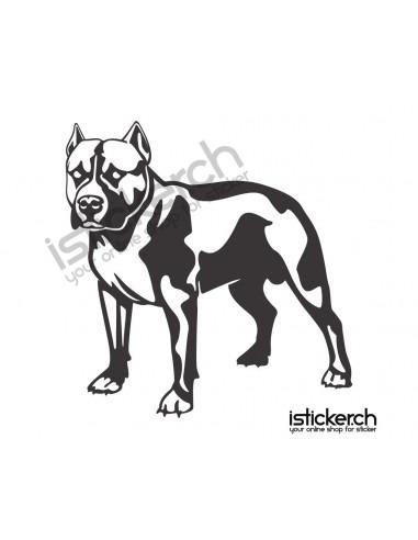 Hunde Pit Bull 2
