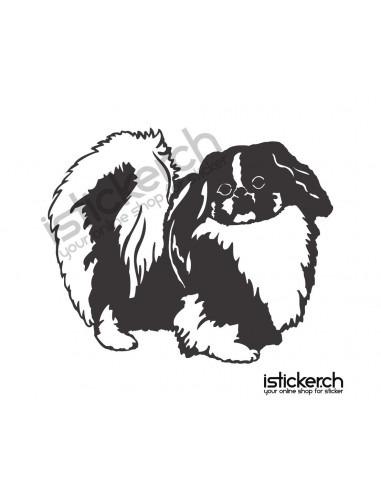 Hunde Lhasa Apso