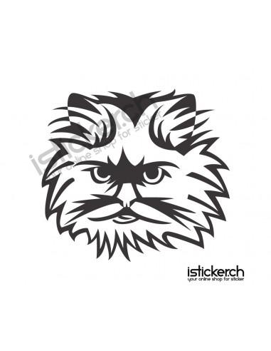 Katze 16
