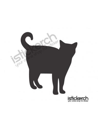 Katze 21