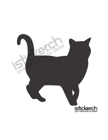 Katzen Katze 23