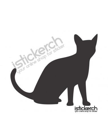Katze 24