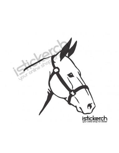 Pferde Pferdekopf 3