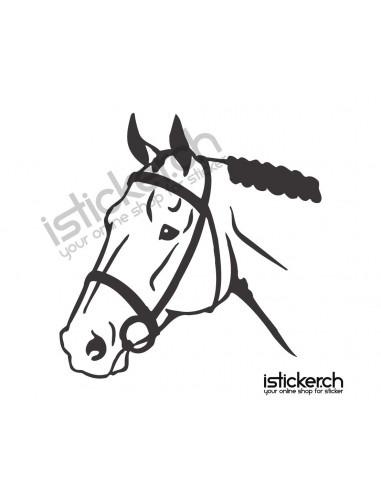 Pferde Pferdekopf 5
