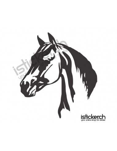 Pferde Pferdekopf 6