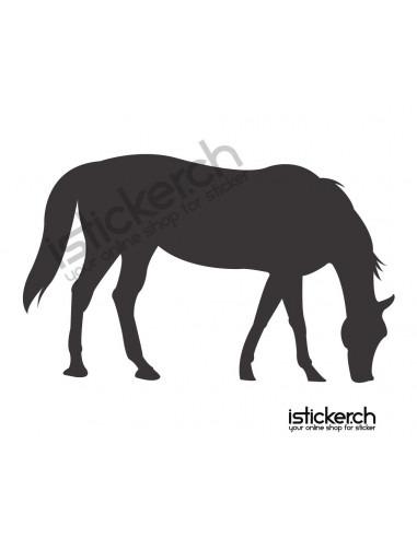 Pferde Pferd 5
