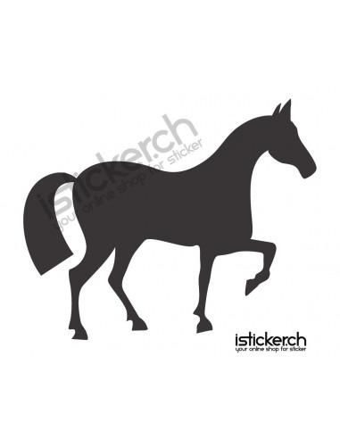 Pferd 8