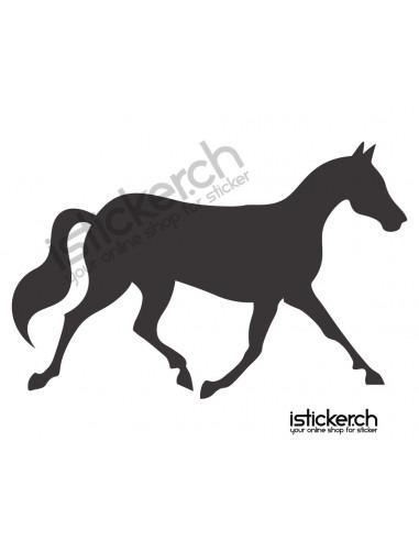 Pferde Pferd 11