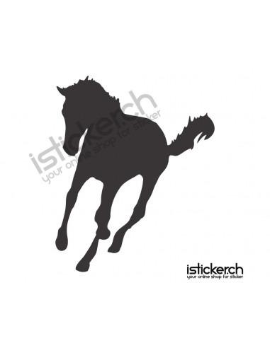 Pferd 15