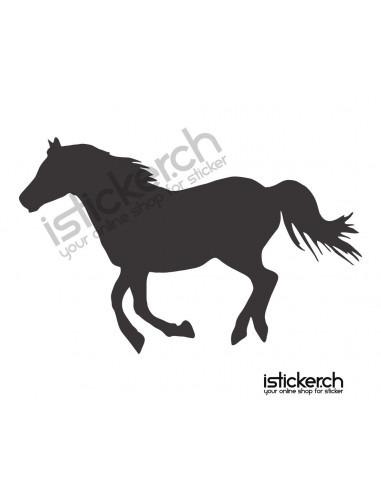 Pferde Pferd 16