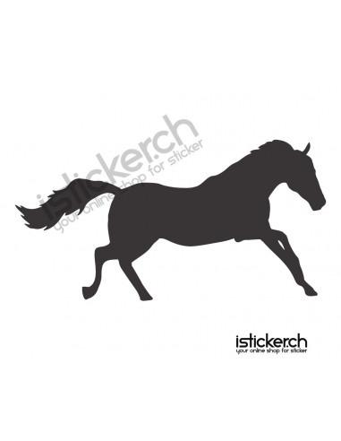 Pferde Pferd 17