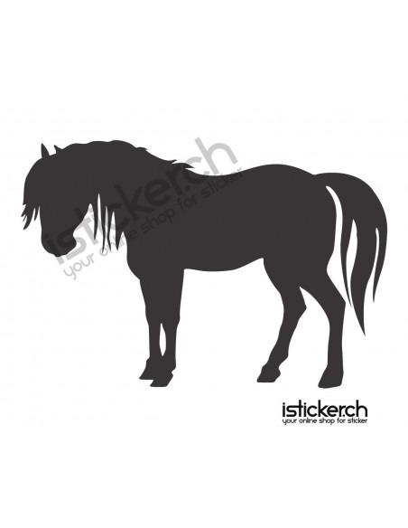 Pferd 24