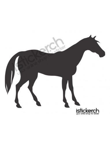 Pferd 25