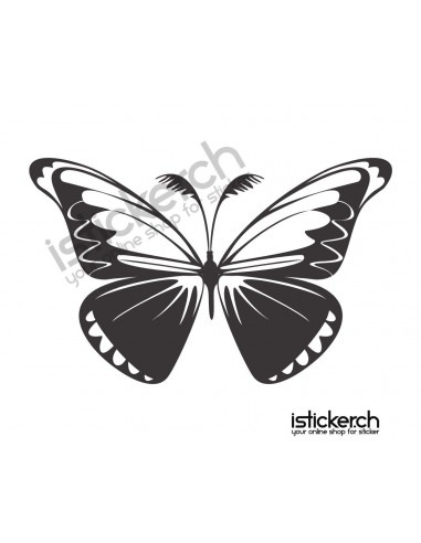 Schmetterlinge Schmetterling 13
