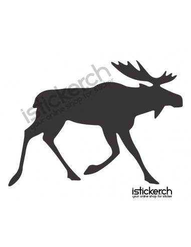 Wildtiere Elch 1