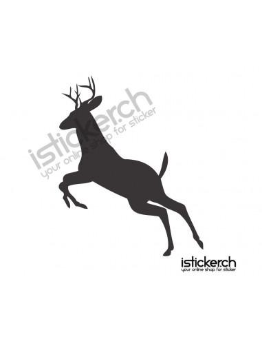 Wildtiere Hirsch 9