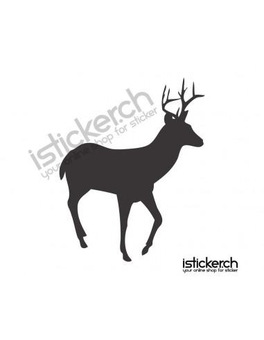 Wildtiere Hirsch 12