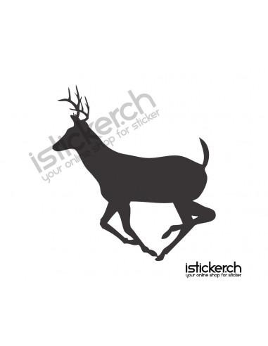 Wildtiere Hirsch 13
