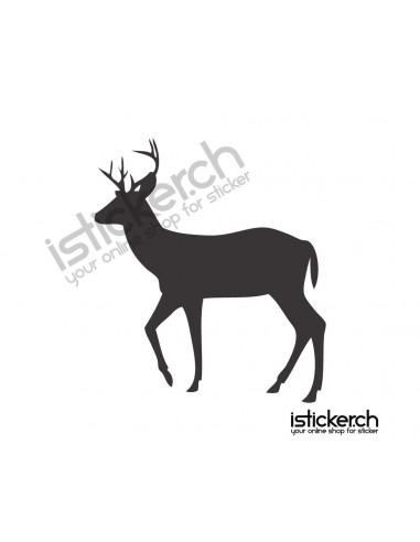 Wildtiere Hirsch 14